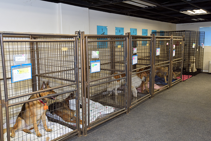Spacious kennels for large dogs