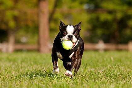 If you're a fan of dog parks, you'll be a fan of gentle remote collar dog training