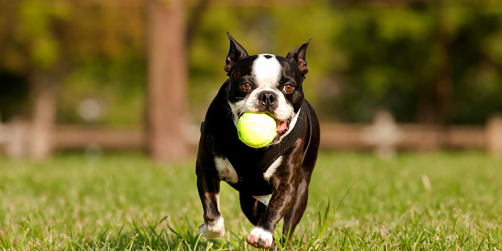 SUN 8/18/19 @ 2 PM BASIC MANNERS DOG CLASS No class on Labor Day Weekend