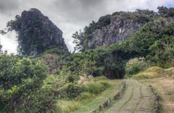 Sheding Trail Landscape