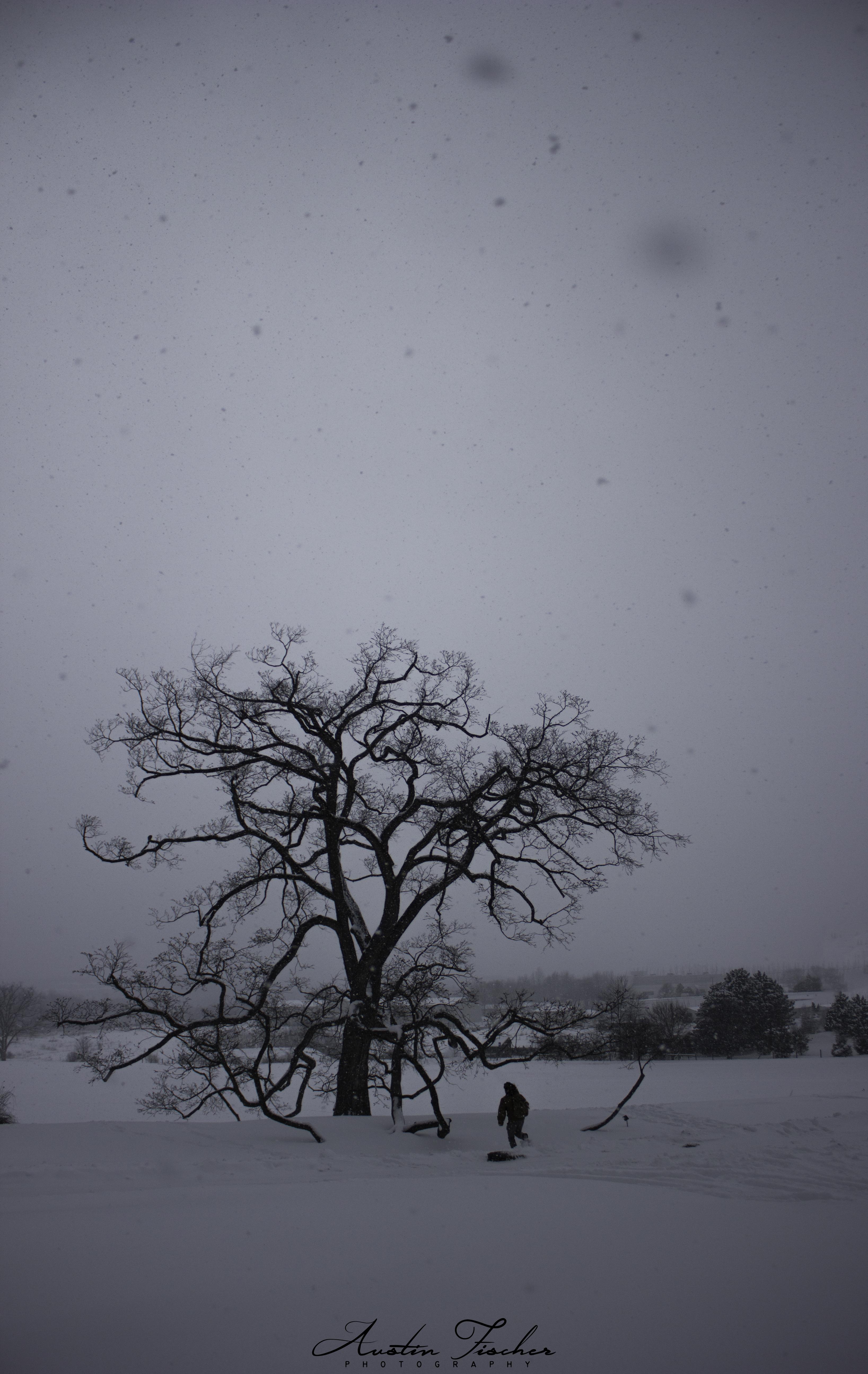 Lone Tree Snow