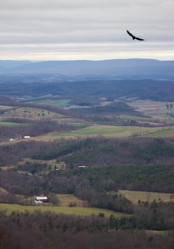 Rolling PA Hills