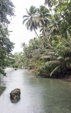 Kawasan River Palms