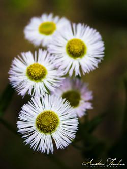 Ridley Creek Flowers