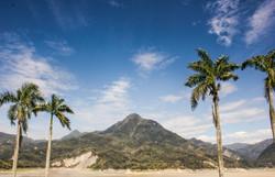 Dapu Palms