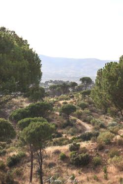 Pinos Reales Trail