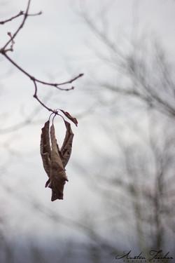 Last Dead Leaves