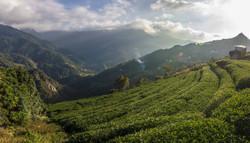 Taiwan Mountain Tea Farm