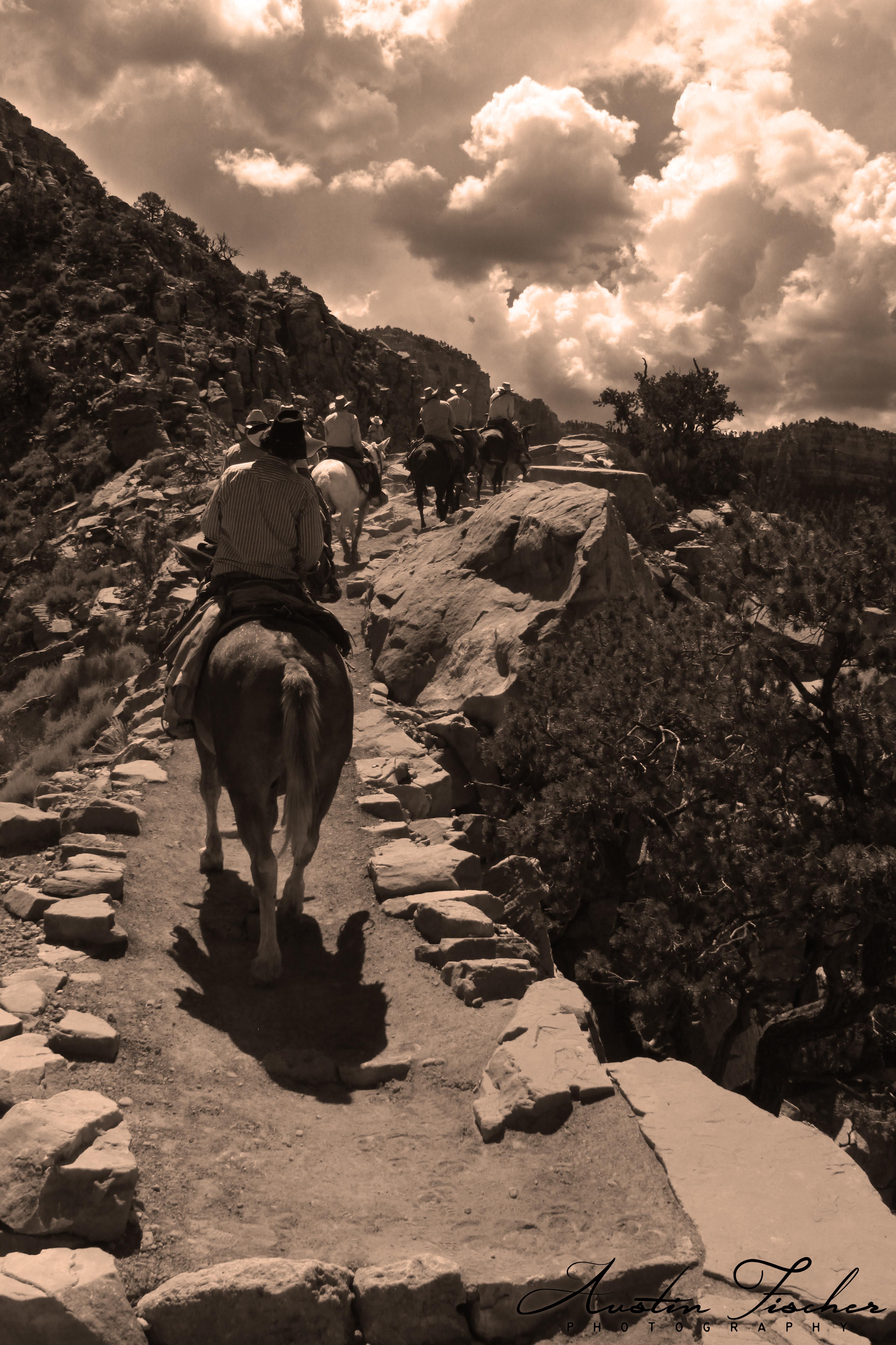 Canyon Horses