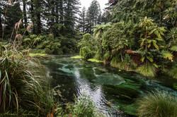 Rotorua Springs