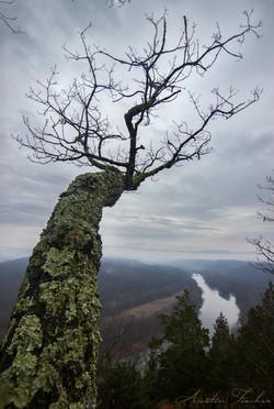 Green Ridge Tree View