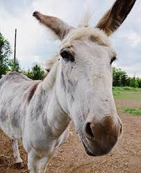 Paddy bought a donkey - a tale of real enterprise