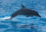 Delfines en Los Cóbanos