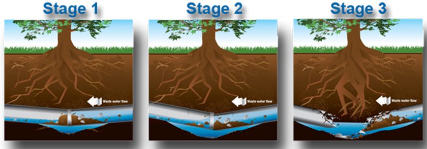 Sewer-line-damage-roots.png