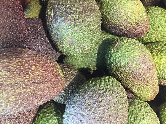 Avocado Haas
