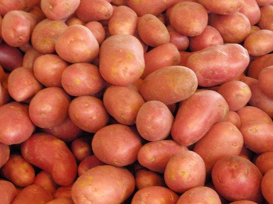 Potato Red