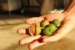 Barenuts