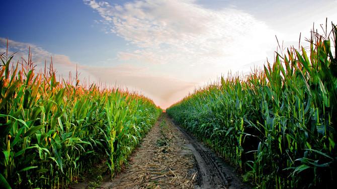 Organic answer to drought stress