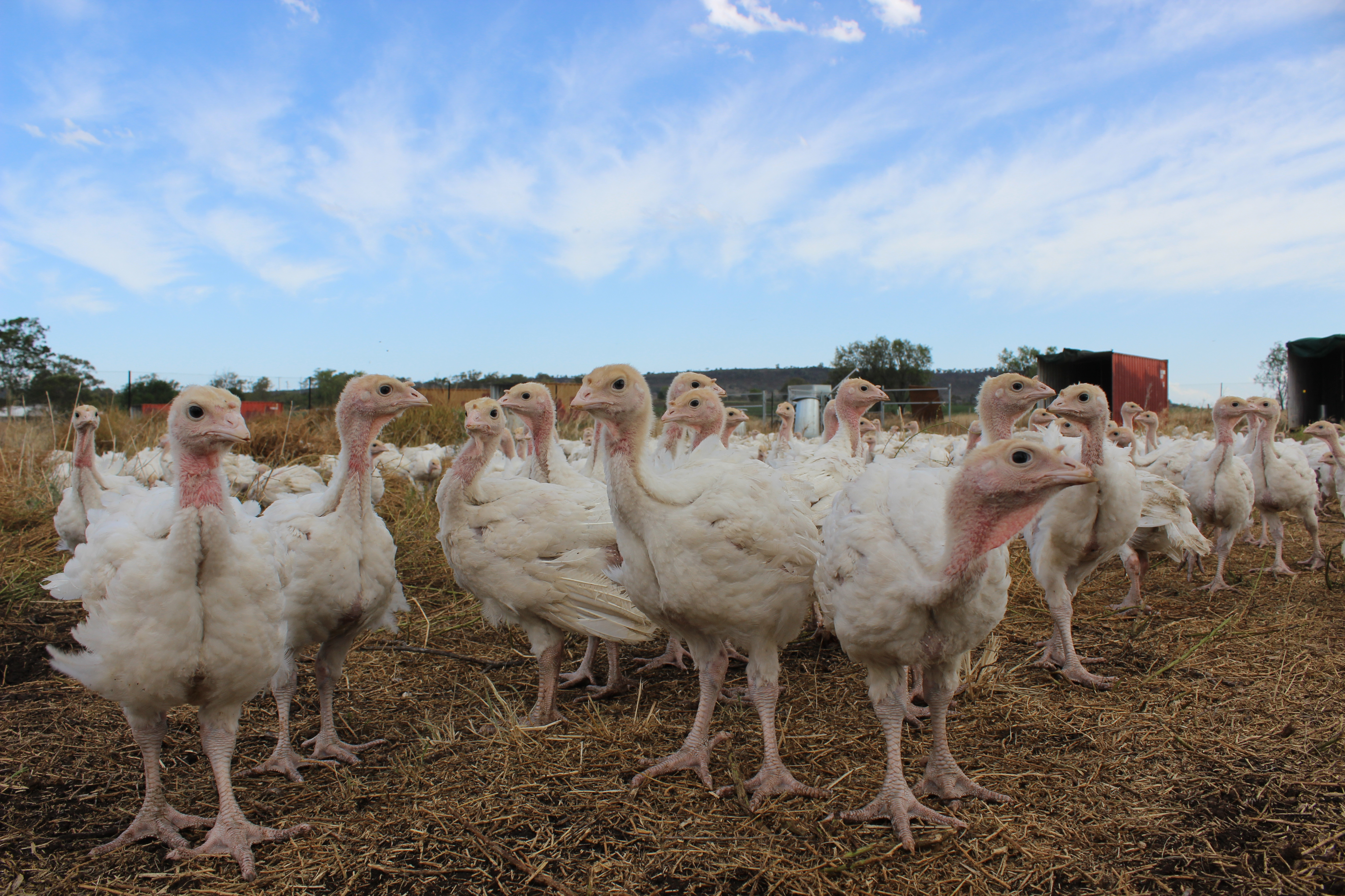 GreenAg Organic Free Range Turkey