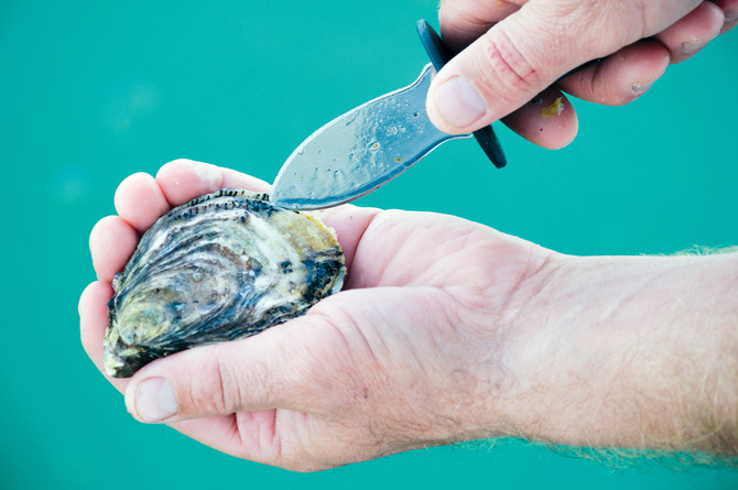 Slow return for infamous Eyre oyster