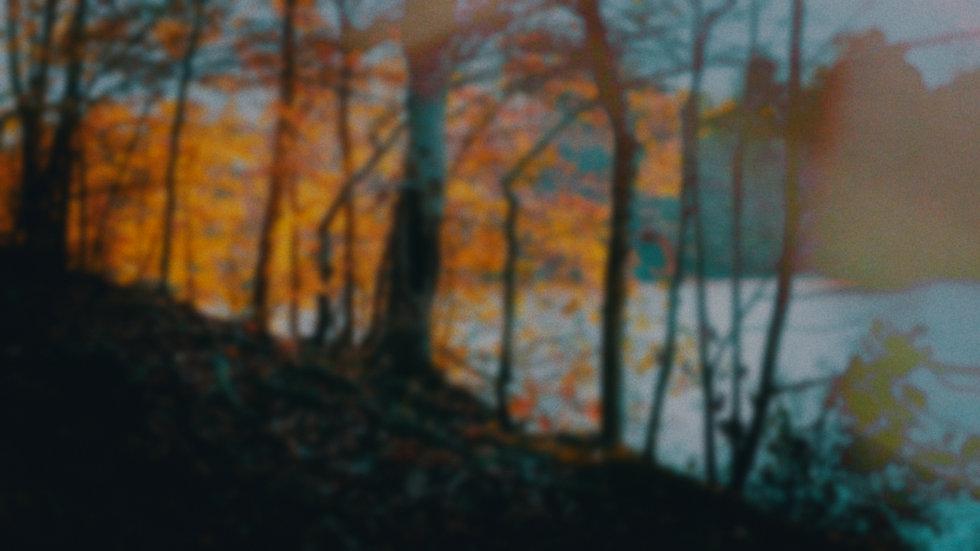 blurrytrees_4.1.1.jpg