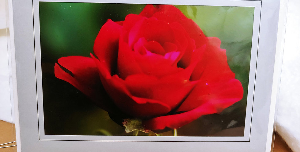 Rose, Muted Red Rose greeting card