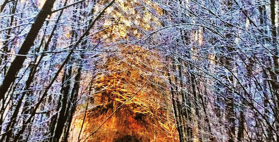 Sun Shining Through the Snowy Trees