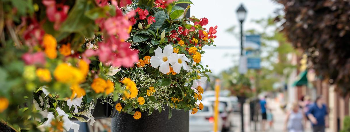 Main Street Picton Flower Baskets Photo Credit: © Daniel Vaughan (vaughangroup.ca)