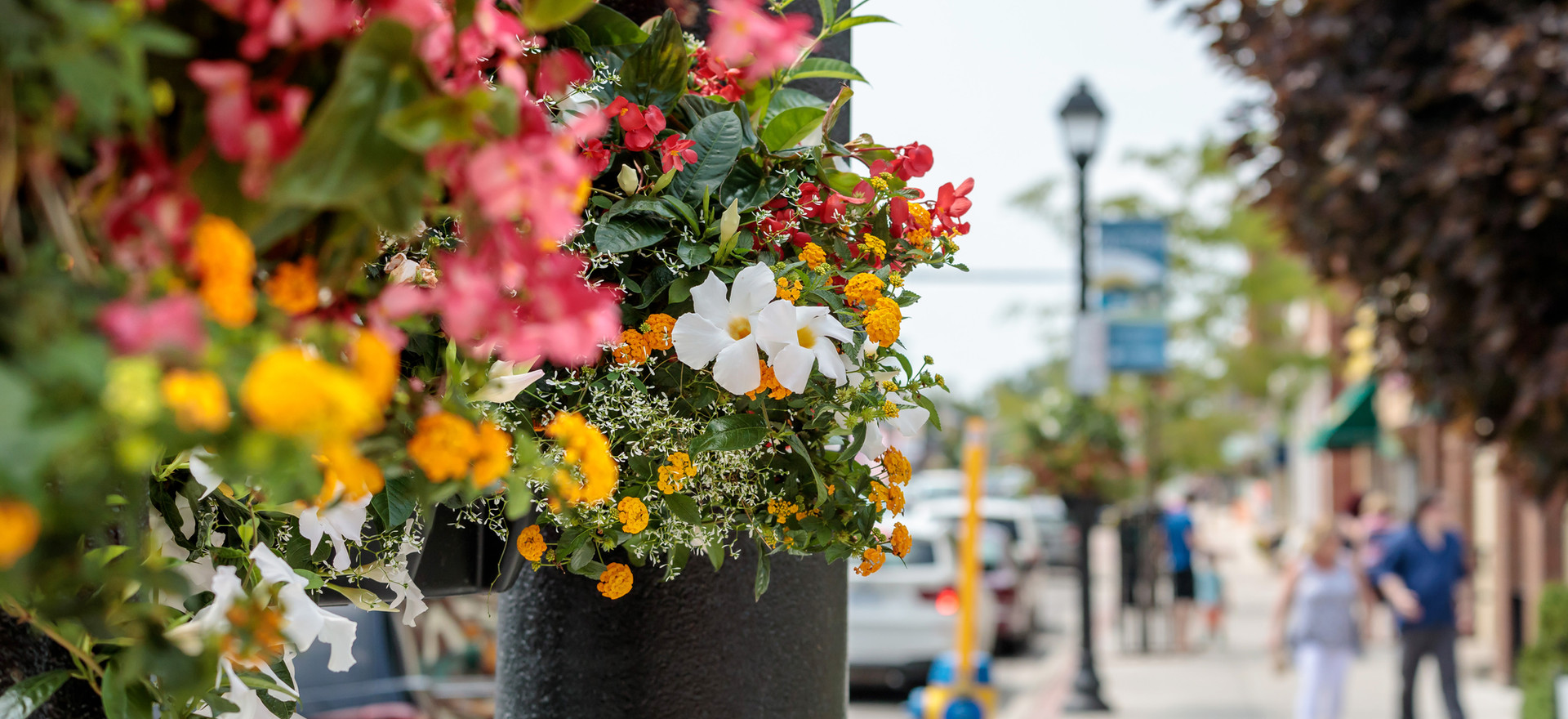 Main Street Picton Flower Baskets Photo Credit: © Daniel Vaughan (vaughangroup.ca)
