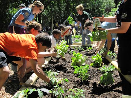 Benefits of Gardening for Teen's Mental Wellbeing