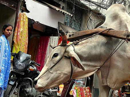 Landefakta om religionsfrihed i Indien