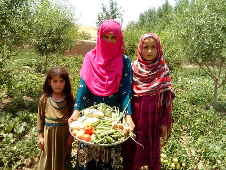 Selvforsørgelse skal dæmpe lokale konflikter i Afghanistan