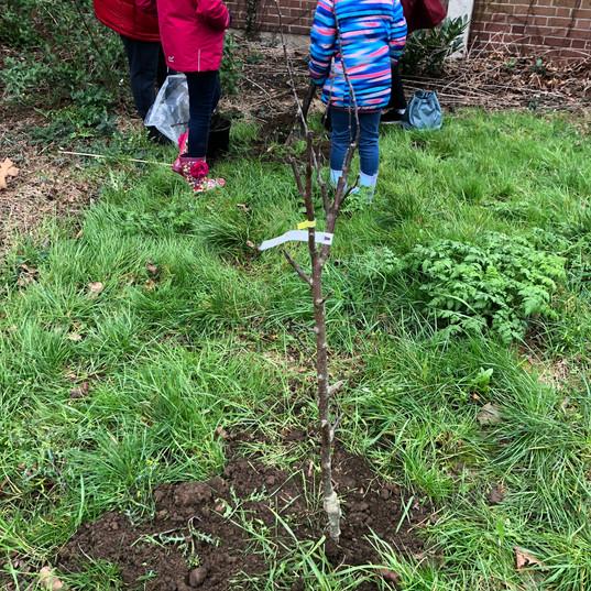 IMG_3890.JPGCommunity Fruit Tree planting 16.3.19