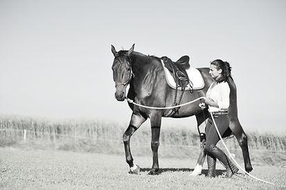 Horseback DB - Bodenarbeit