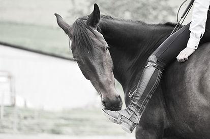 Horseback DB - Pferdeausbildung