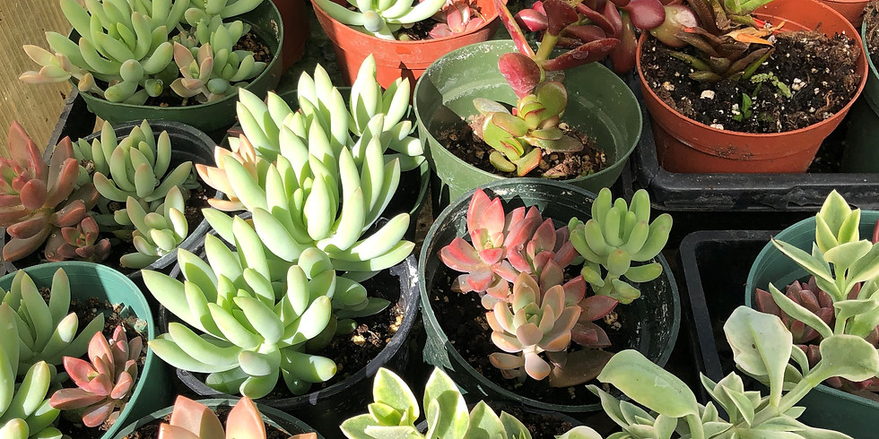 Succulents and Seeds