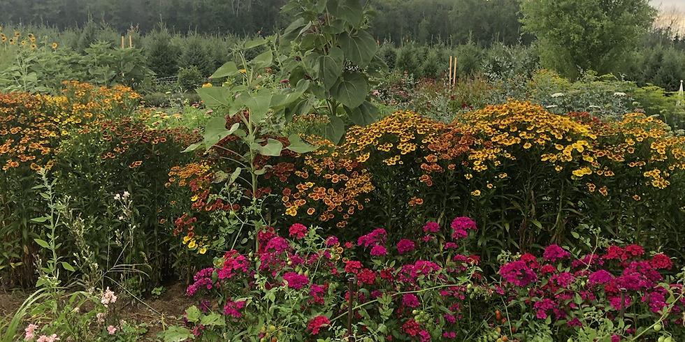 August Gardens in Bloom