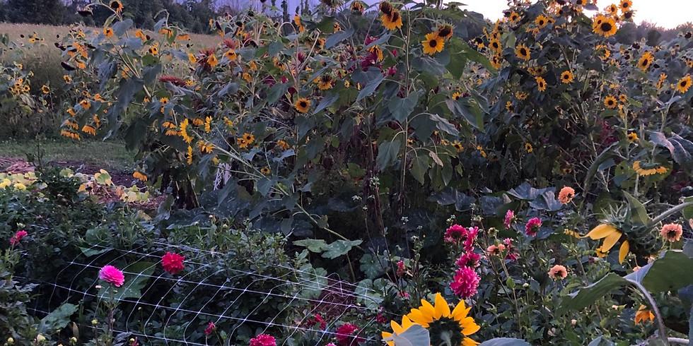 Garden Tour for Homeschooling Oct 6