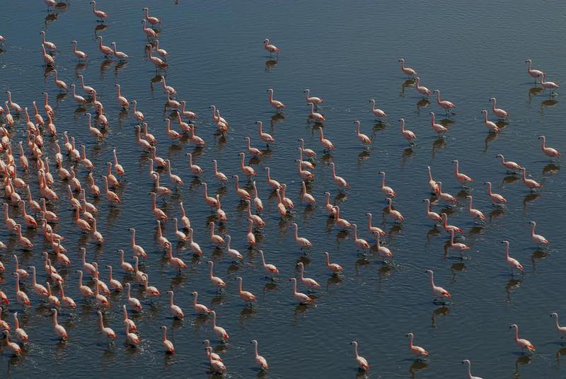 La Pampa'da Flamingolar