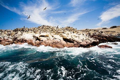 ballestas-islands-peru.jpg