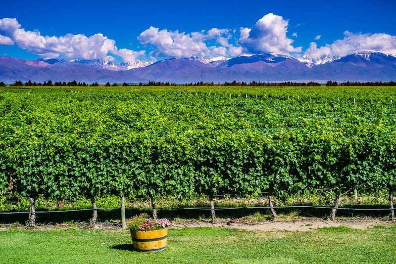 Mendoza Şarap Vadisi