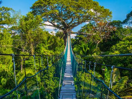 Vahşi Hayatın Kalbi: Amazon Ormanları