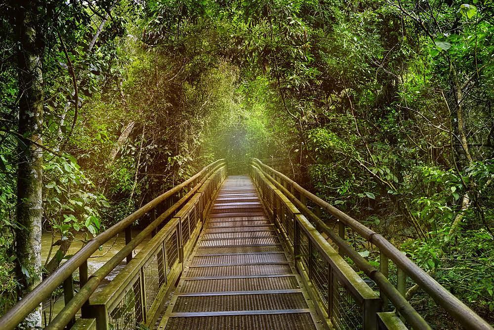 Iguazu Şelalesi'ni çevreleyen yağmur ormanları