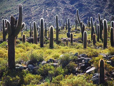 Los-Cardones-National-Park-Salta.jpg