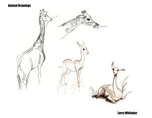 Animal Life Drawings