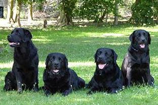 family-Layla.jpg
