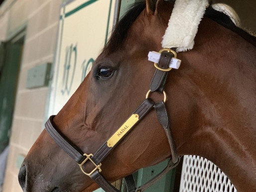 Road to Kentucky Derby: Rebel Stakes video
