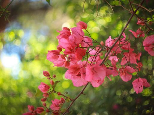 10 Trepadeiras Incríveis para o Seu Jardim