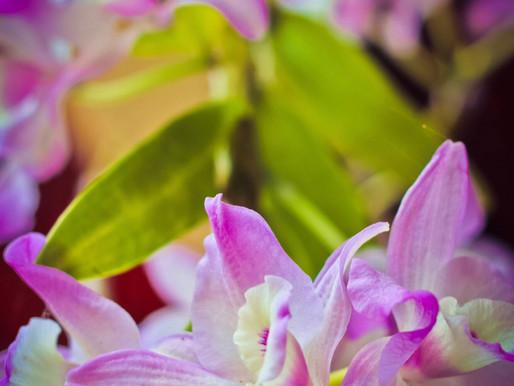 13 Tipos de Orquídeas para Ter em Casa
