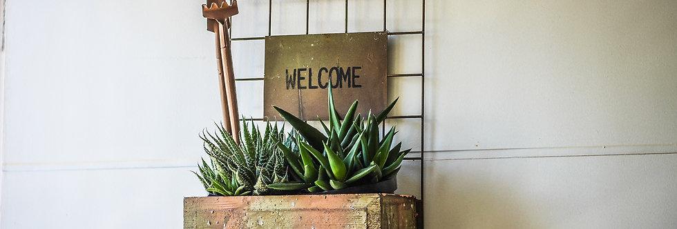 Welcome - Suporte para plantas